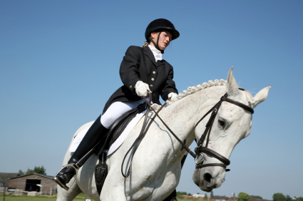 English rider and beautiful white horse