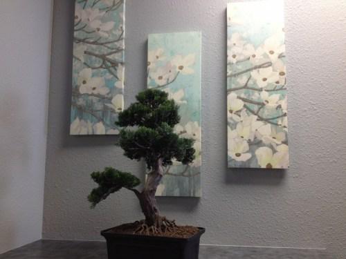 big bonsai tree