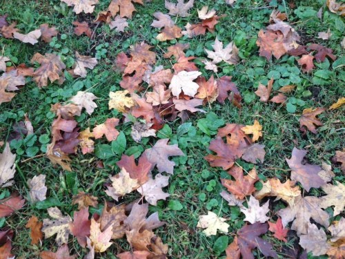 God's collage: fall colored leaves