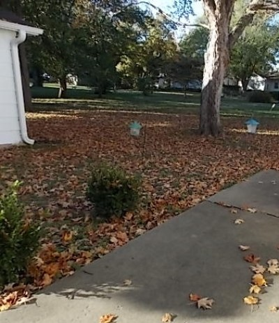 backyard filled with leaves