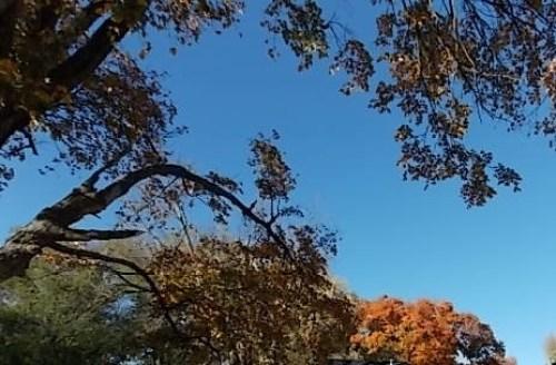 blue sky-orange leaves