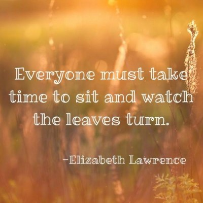 leaves turning quote
