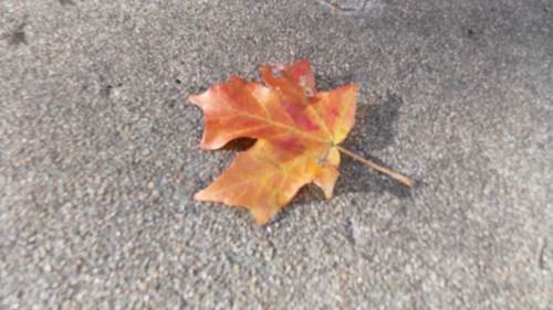 Red-yellow leaf