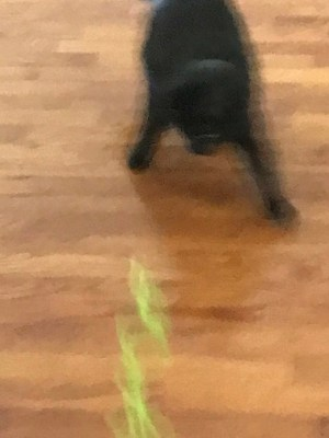 Natalya in action chasing yarn