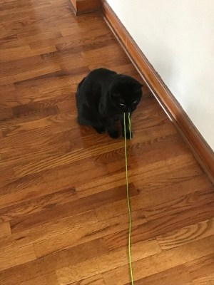 The green yarn matches her eyes