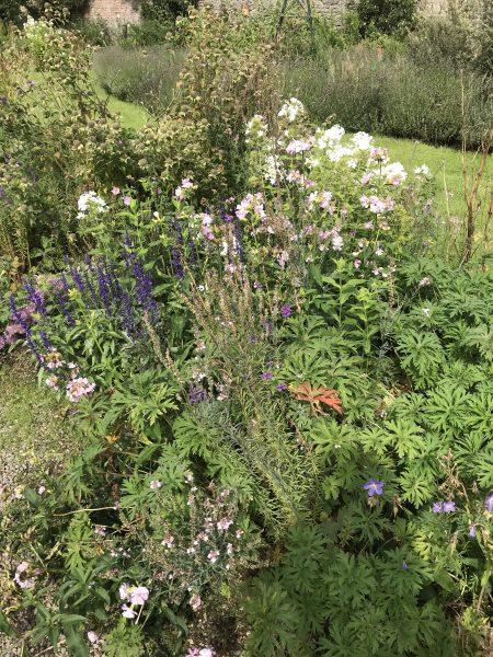 village garden flowers