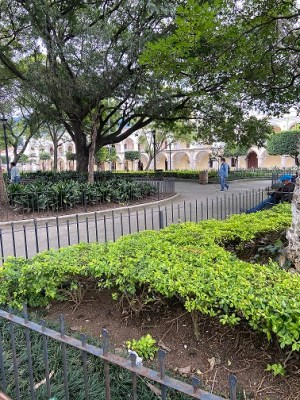 manicured trees, Parque Central