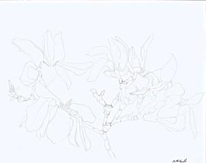 pen drawing: Magnolia #1