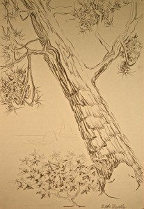 charcoal drawing: Pine Tree, Japanese Garden