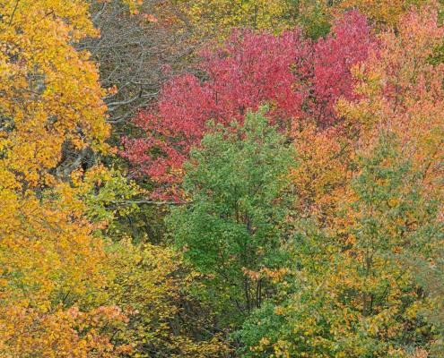 Black Run Preserve Fall Color by Doug Venner www.bethsawickie.com