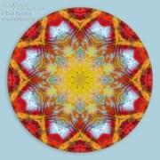 Fall Color Mandala 1 by Beth Sawickie www.bethsawickie.com/fall-color-mandala-1