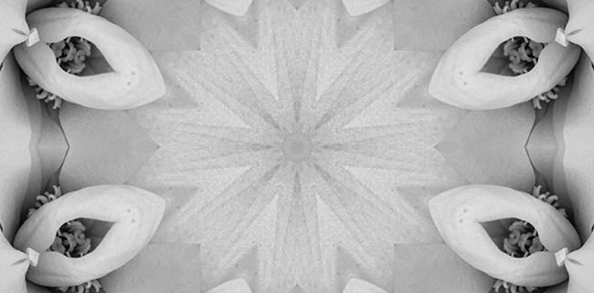 Black and White Mandala 1 by Beth Sawickie www.bethsawickie.com/black-and-white-mandala-1