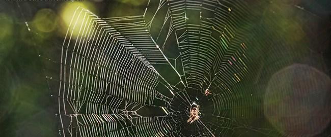 A Web of Her Own by Beth Sawickie www.bethsawickie.com/a-web-of-her-own #spider #spiderweb #web