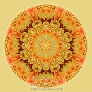 Yellow Orange Mum Mandala by Beth Sawickie www.bethsawickie.com/yellow-orange-mum-mandala