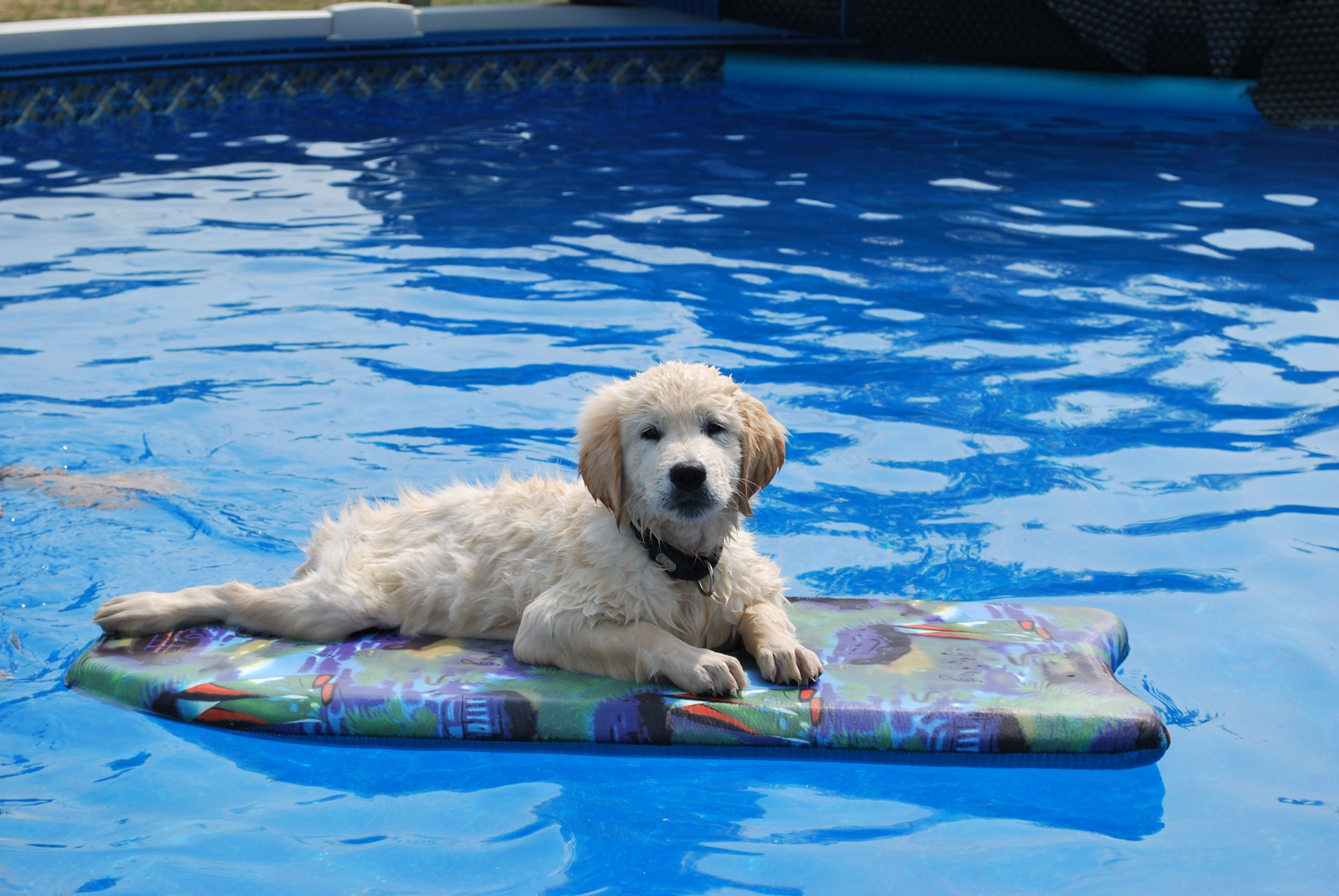 Fall Pug Wallpaper Neighborhoods With Pools Mooresville Nc Subdivisions