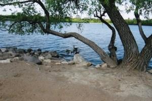 Waterfowl in the Lake