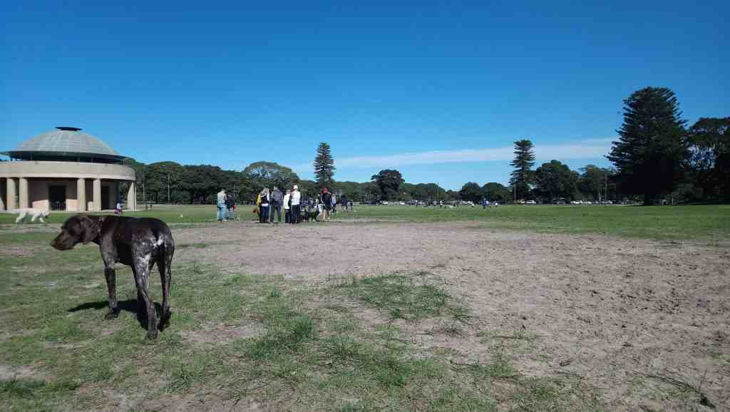 Dogs in Centennial Park