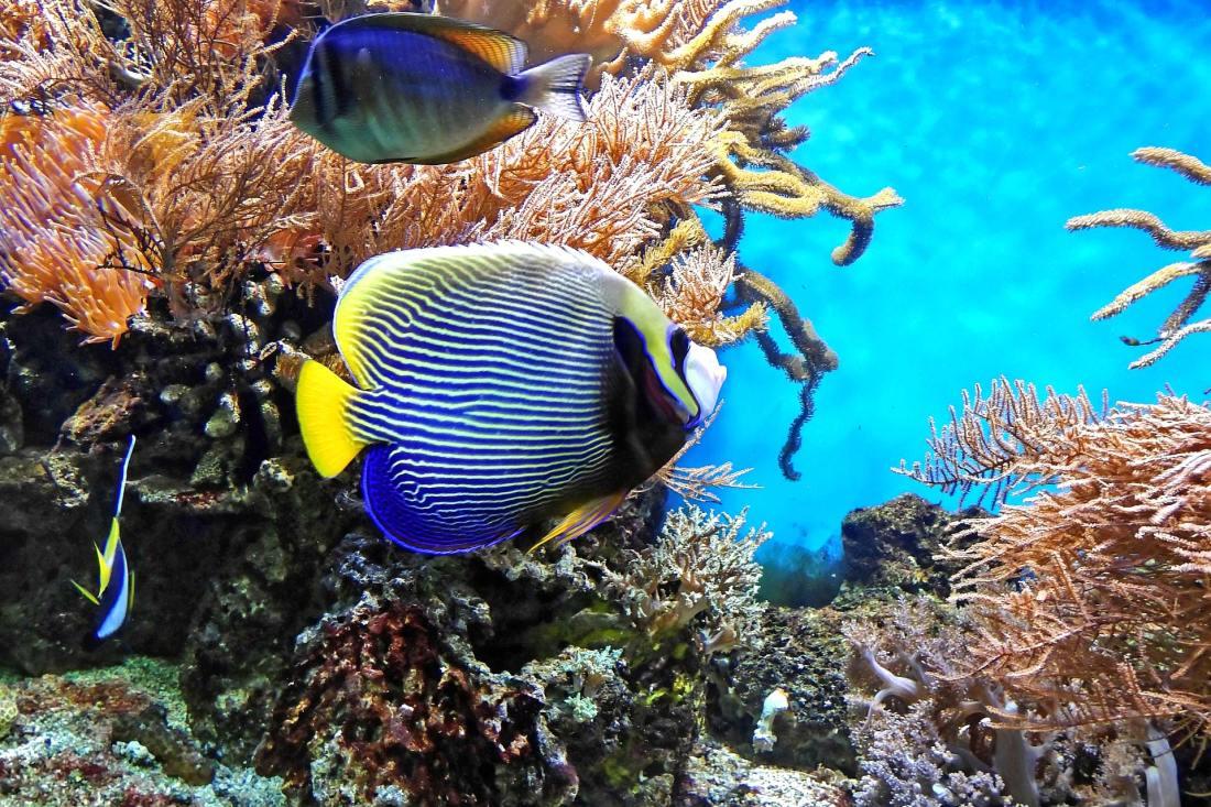 Korallenfische, Great-Barrier-Reef, Australien