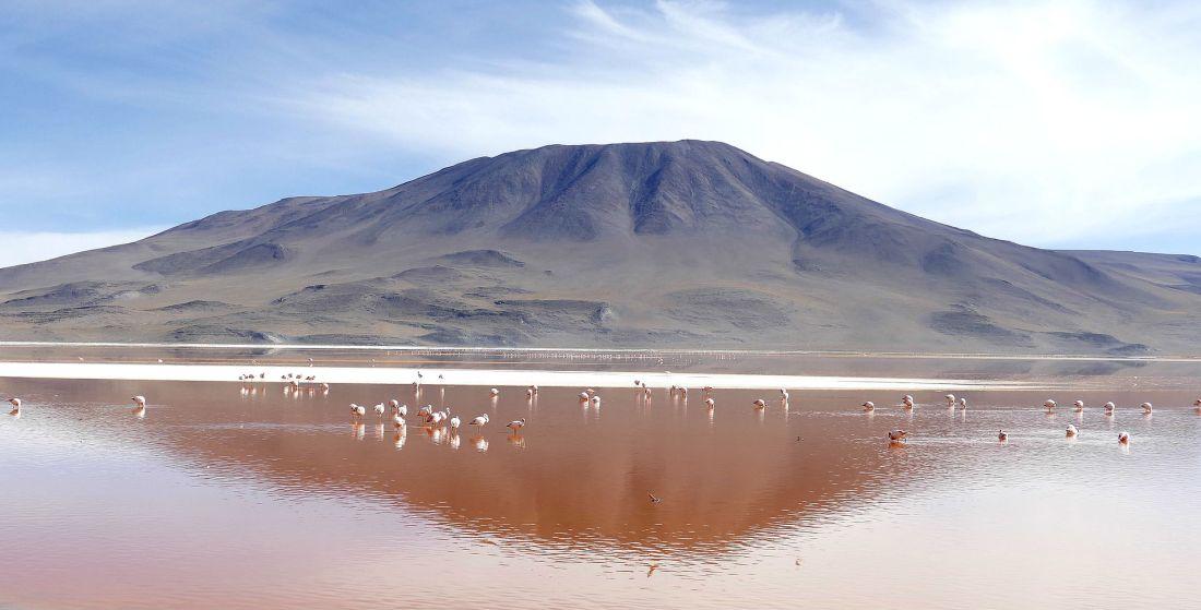 See Laguna Colorada in Bolivien