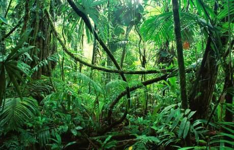 Dschungel in Kuba
