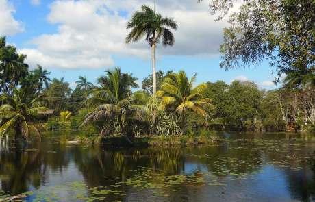 Tümpel und Sümpfe sind auf Kuba zahlreich anzutreffen