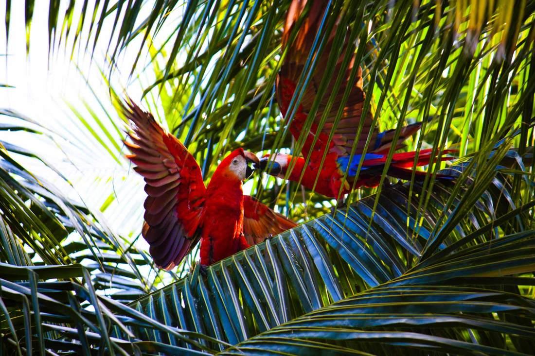 Die Artenvielfalt Brasiliens entdecken