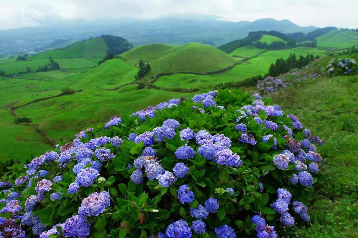 Die grüne Landschaft von São Miguel