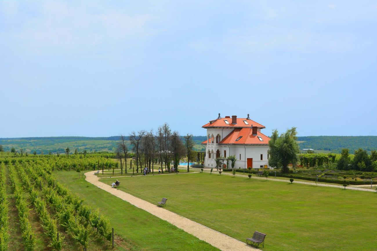 Weinberge in Rumänien