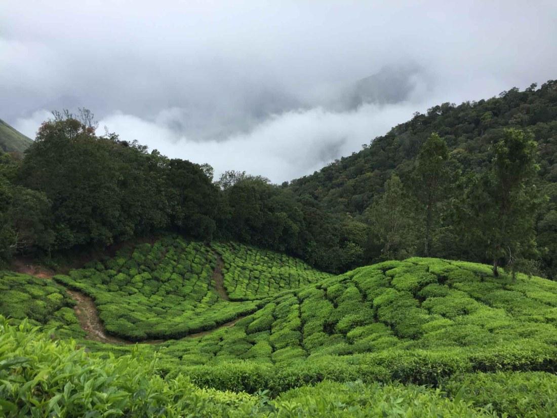 Sri Lanka - Teeplantagen