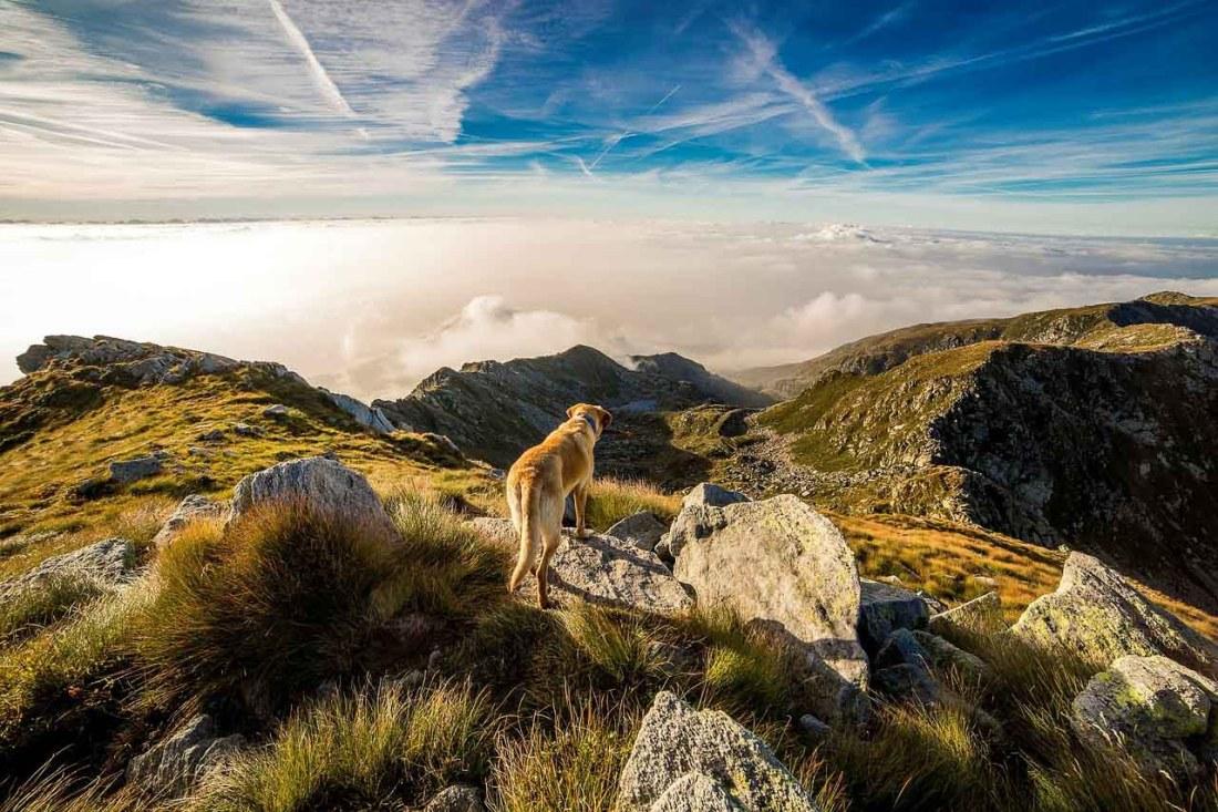 Hund auf einem Berggipfel über den Wolken