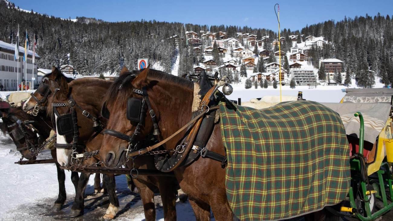 Pferdeschlitten am Obersee in Arosa