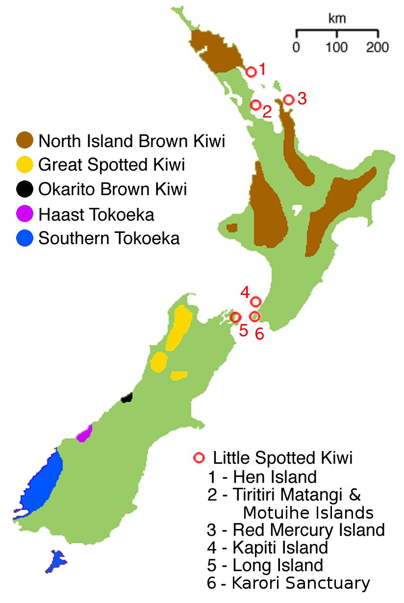 Kiwi Vogel Population Neuseeland