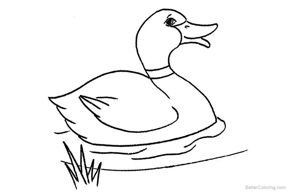 Mallard Duck Near To Landing Coloring Pages Color Luna