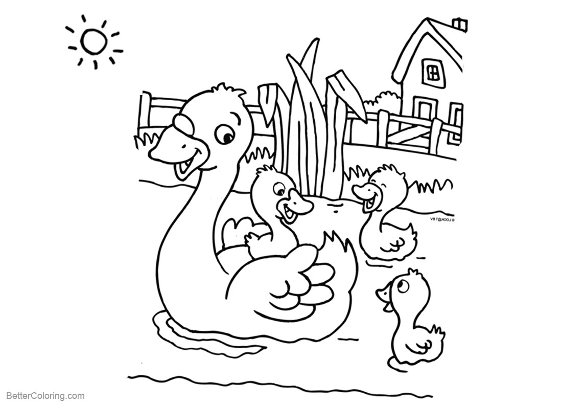Pond Coloring Pages Four Ducks Swimming