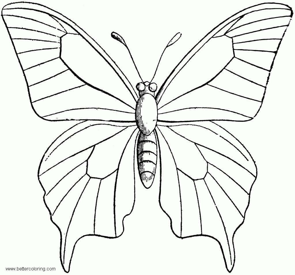Butterfly Coloring Pages Clipart