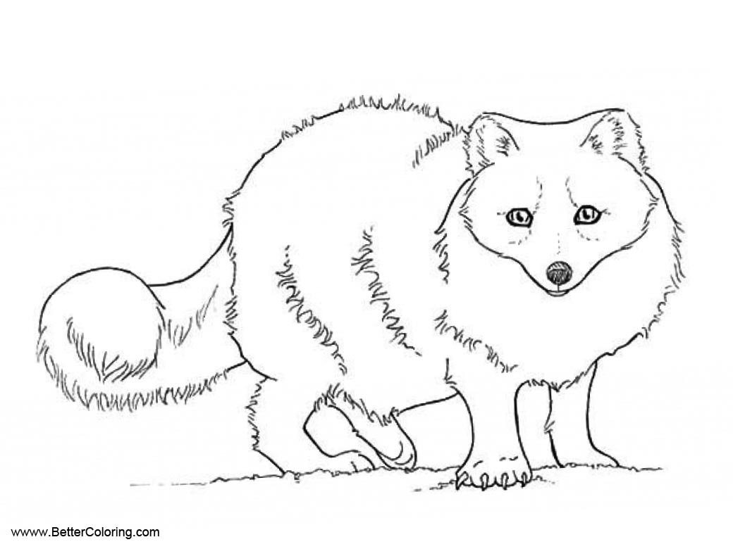 Tags Tundra Animals Coloring Pages Printable