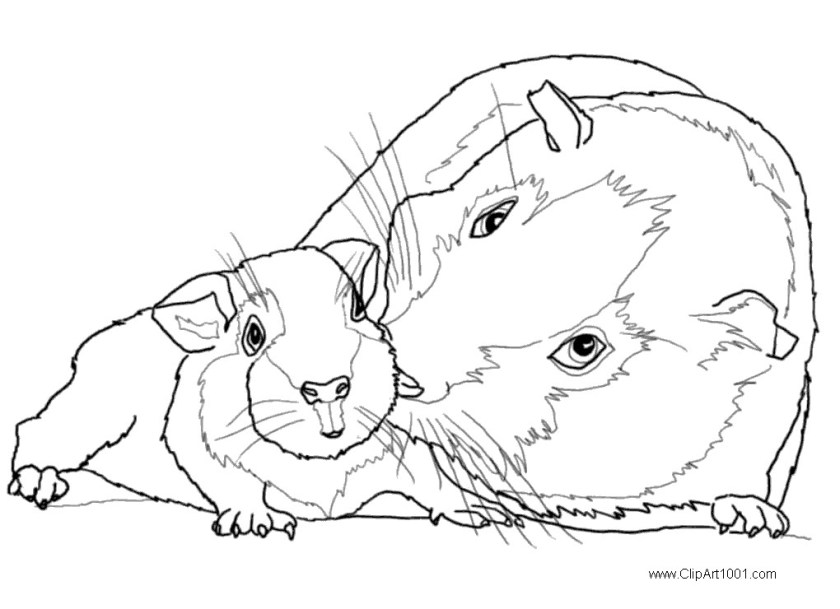guinea pig coloring pages mom and baby  free printable