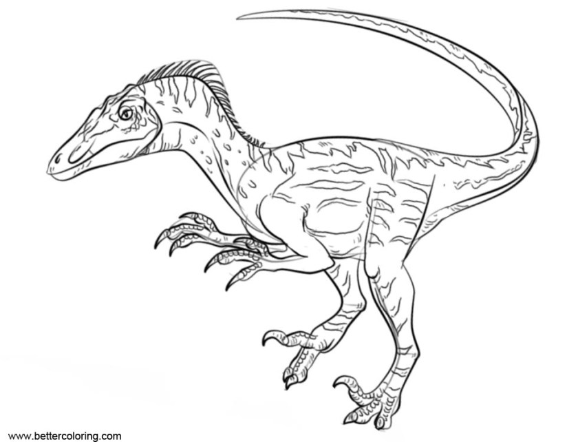 jurassic world raptor a lego guy coloring page pages