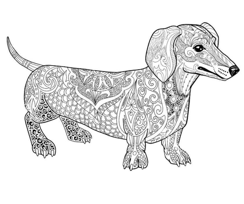 dachshund coloring pages coloring pages