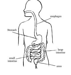 digestive system coloring pages fold labeling [ 1024 x 1340 Pixel ]