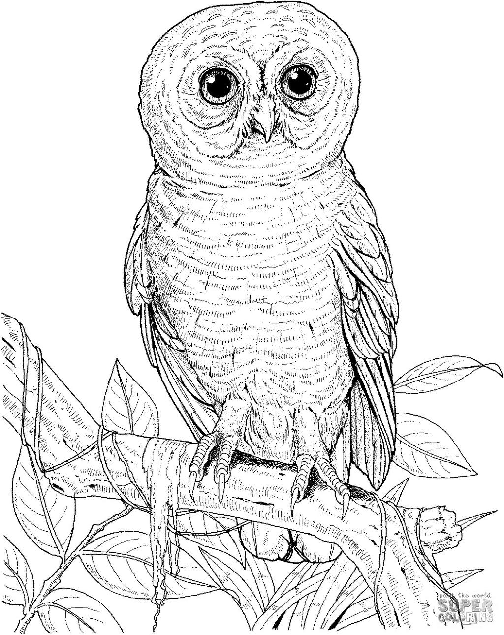 Free Snowy Owl Worksheet