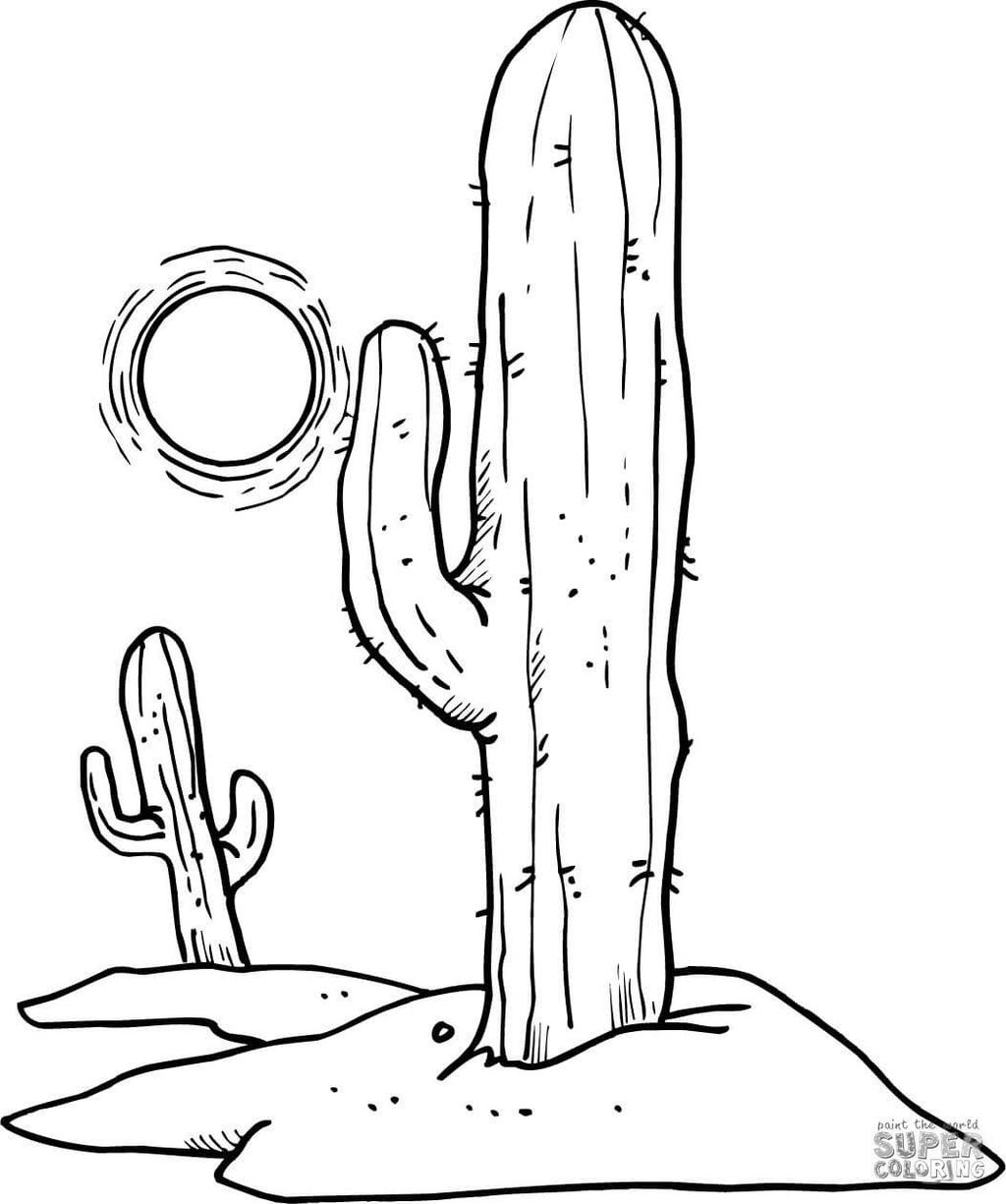 Sonoran Desert Food Chain Coloring Pages Lustermahtab Line