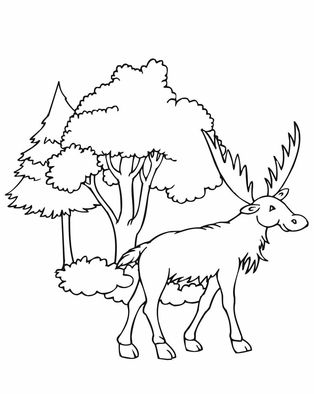 Moose Coloring Pages Worksheet