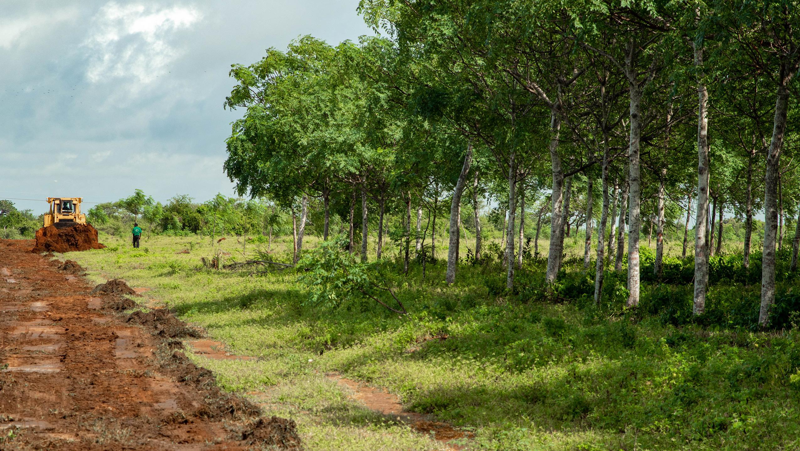 La plantación de árboles reduce la amenaza climática