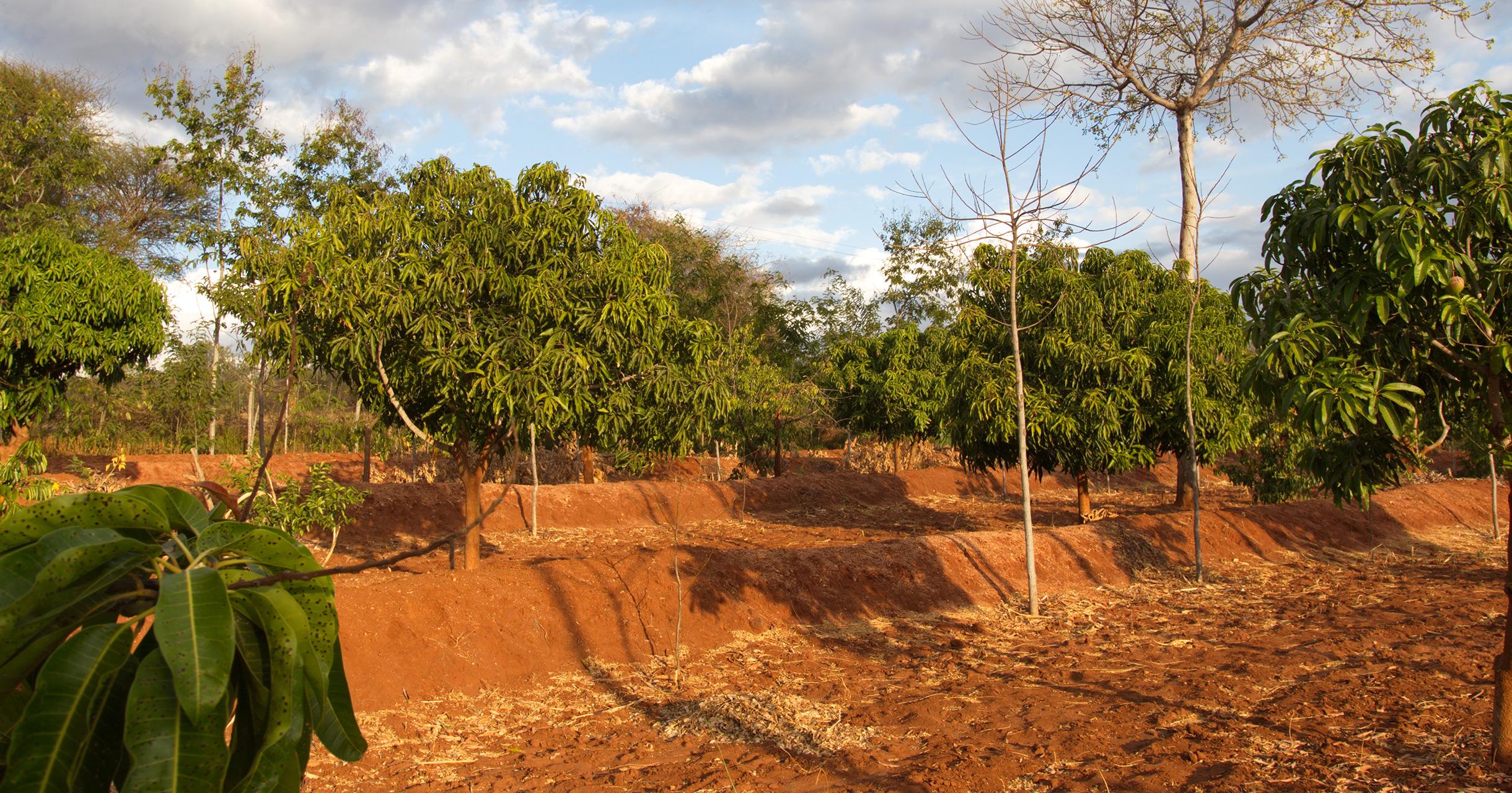 Utbetalningar för träden genomförda
