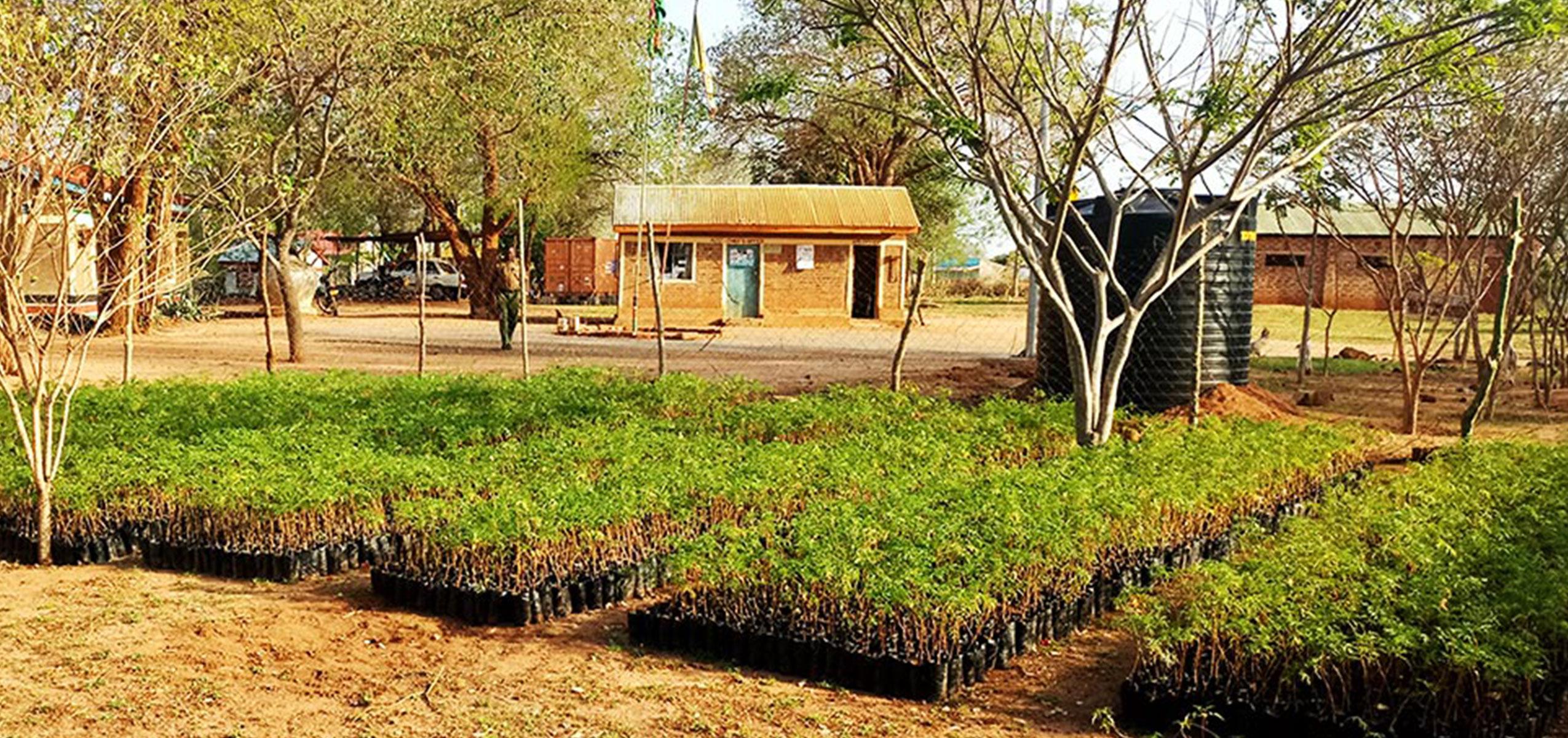 Regnperiod betyder nyplantering