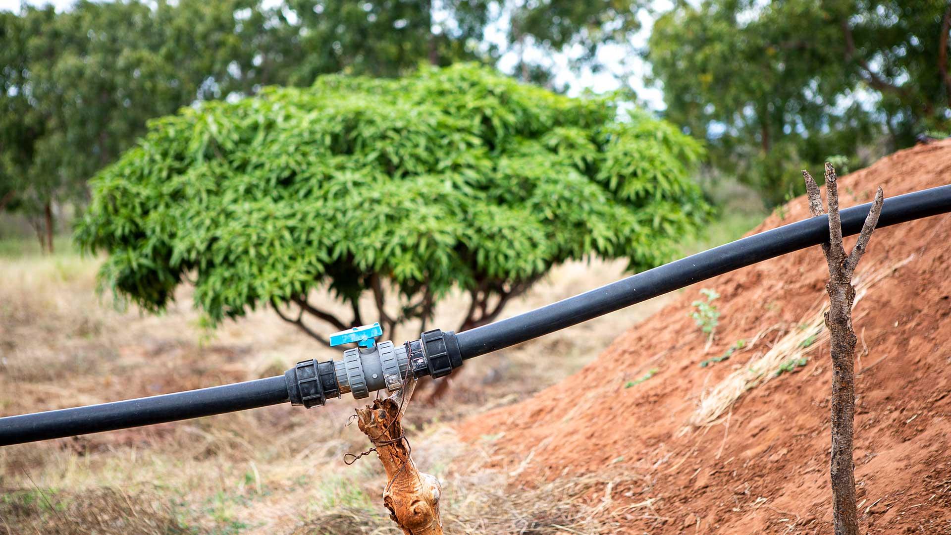 Närbild på en bevattningsdetalj.