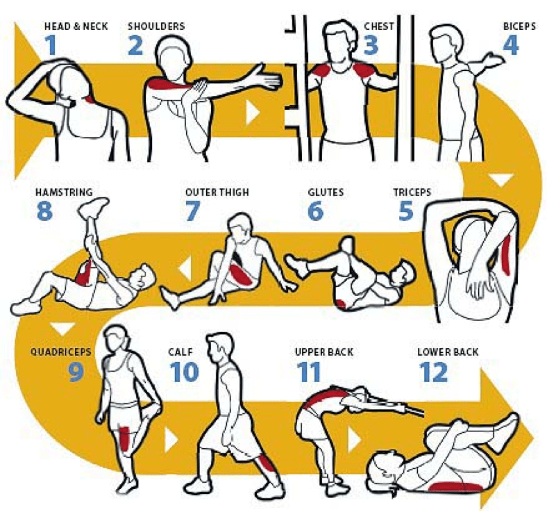Best Cool Down Stretches