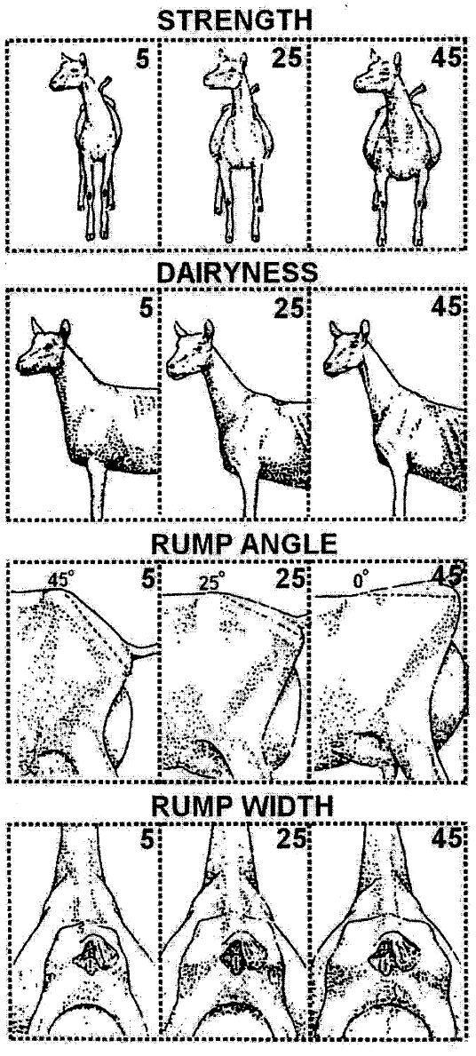 Dairy Goat Linear Appraisal