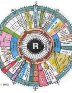 conditions that iridology can detect also better living rh betterliving